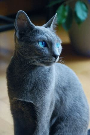 Bugs Blog: Real life warrior cats!