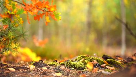 Autumn Sunny Forest Background