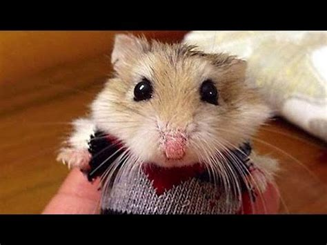 No One Would Beat The Depression Of This Hamster! | Doovi