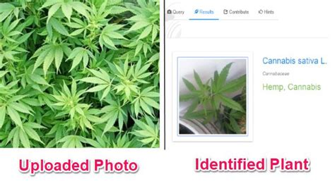 Identify Plants from Photos with These 5 Free Plant