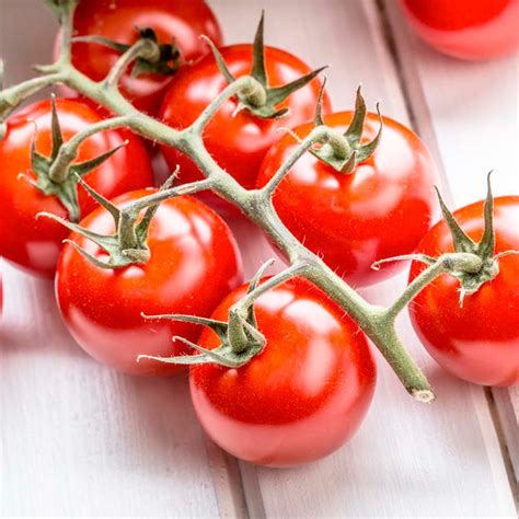 Grafted Tomato Plants - F1 Crimson Cherry - All Vegetable