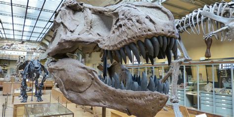 What does the Bible say about dinosaurs? | Articles
