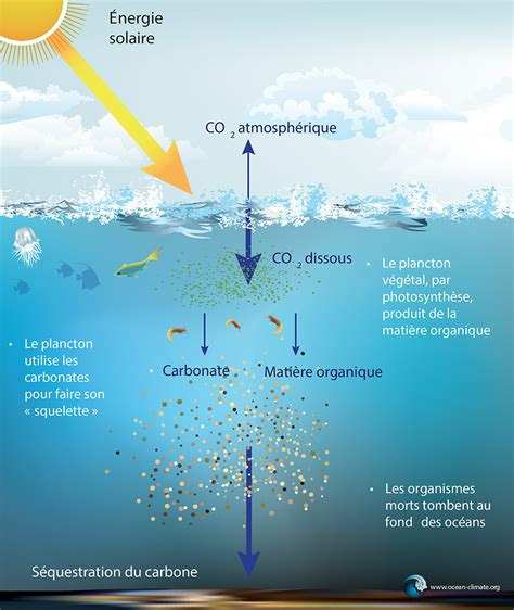 Plankton networks driving carbon export in the