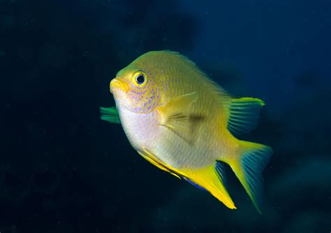 Fish Can Recognize Faces, a Surprisingly Human Skill