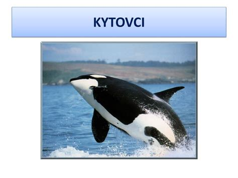 PPT - KYTOVCI PowerPoint Presentation, free download - ID